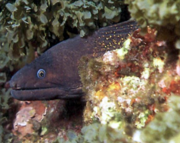 PLEVRA Diving site